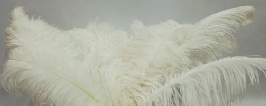 Ostrich feather, WHITE, 50-60 cm, Price by one.